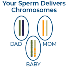 FertilAid for Men - Your Sperm Delivers Chromosomes