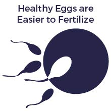 Healthy Eggs are Easier to Fertilize