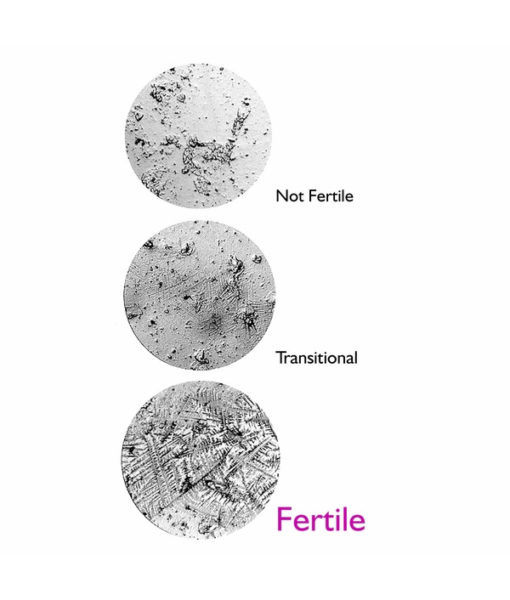 Fertile Focus Ferning Pattern