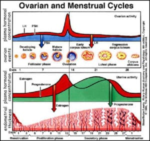 Fertility Hormone Levels and Sperm Parameters - Monitoring at Home